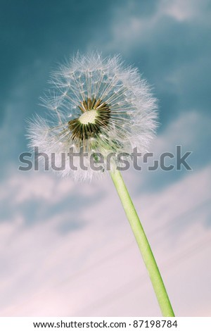 dandelion on the sky - stock photo