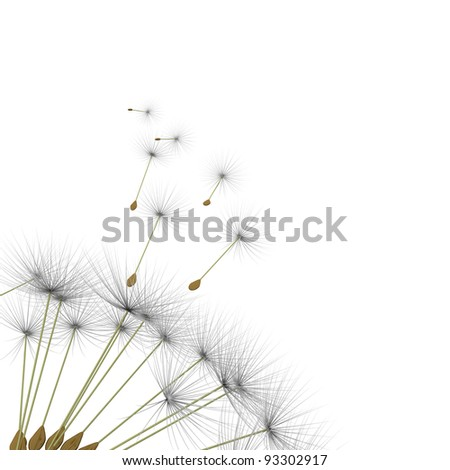 dandelion parachute on a white background