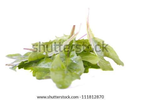 dandelion's green leaves for salad - stock photo