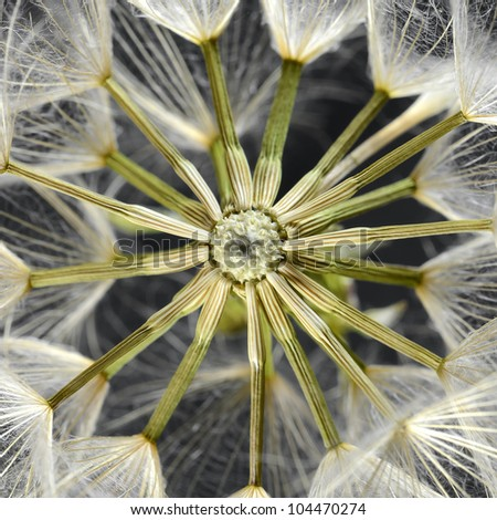Dandelion seed head - stock photo