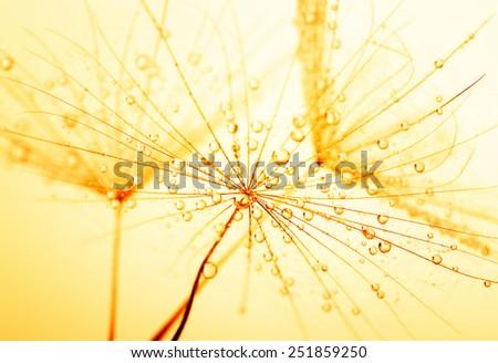 Dandelion seed in golden sunlight - stock photo