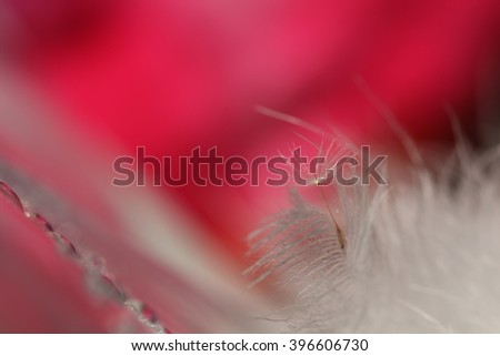 dandelion seed with drops and feather - stock photo