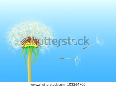 dandelion seeds blowing from stem
