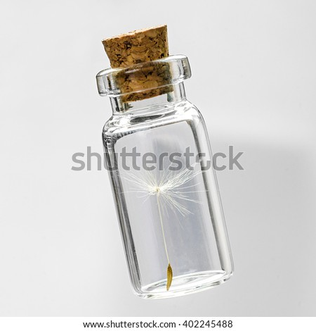 dandelion seeds in small glass bottles with gray background,  safeguard concept - stock photo