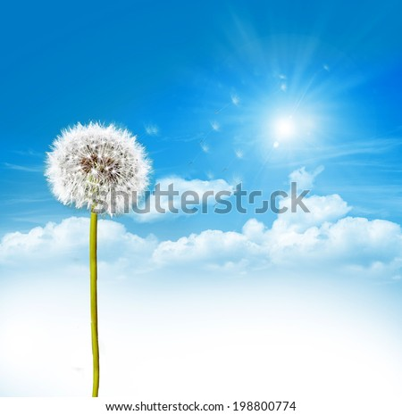 dandelion seeds on a blue sky - stock photo