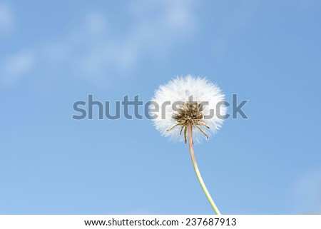 Dandelion set against a blue sky