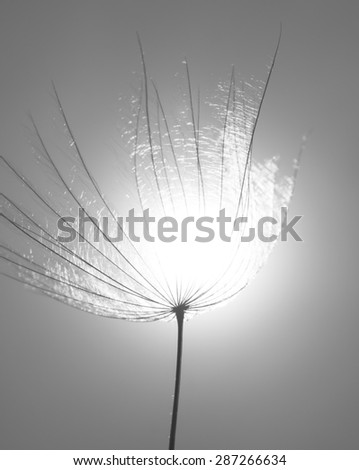 Dandelion spring flower background - stock photo
