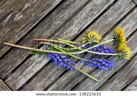 Dandelions & Blue Bell Flowers on old wooden table picked in Spring or Summer in Rural England