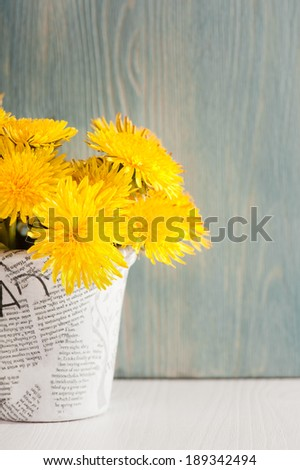 Dandelions in a news paper pot on white blue wooden background  - stock photo
