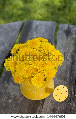 dandelions in a watering can on wooden table - stock photo