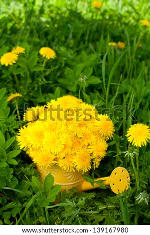 dandelions in a watering can standing on grass - stock photo