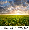 dandelions in the meadow on the sunset - stock photo