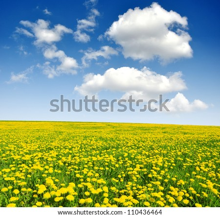 dandelions in the meadow with blue sky