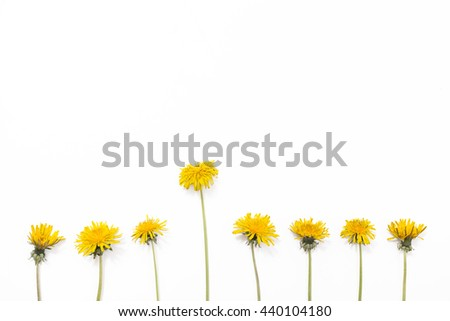 Dandelions isolated on white background. Yellow summer flowers, lay flat - stock photo