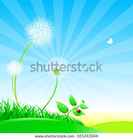 Dandelions on a summer meadow.Nature composition. - stock photo