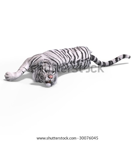 Dangerous Big Cat White Tiger With Clipping Path Over White