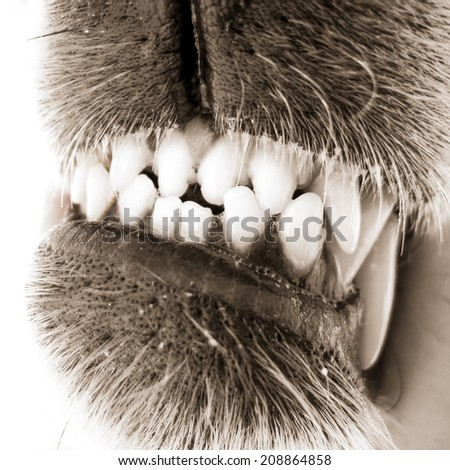 dangerous dog teeth  - stock photo