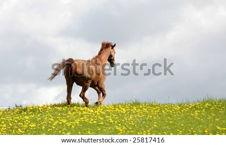 danish horses on a field in the spring
