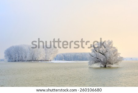 Danube river and frosty trees in morning time - stock photo