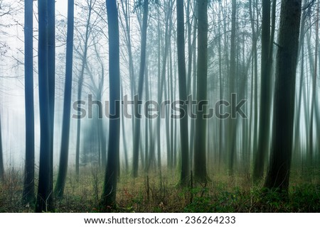 Dark and Dreary Forest. Distorted Image of a spooky magical winter forest