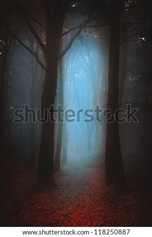 Dark autumnal forest in a foggy day | a concept for book and music albums covers
