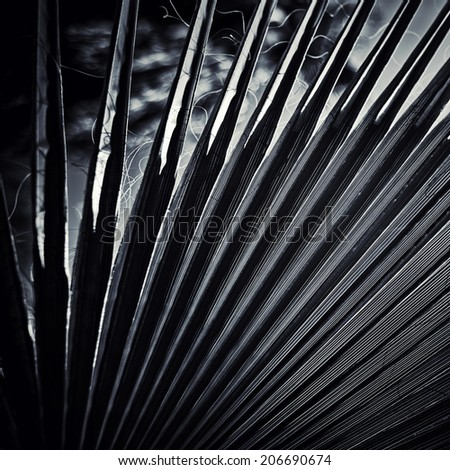 dark black and white palm leaf background - stock photo