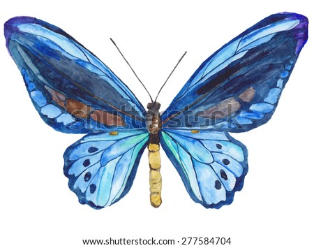 Dark blue butterfly isolated on white background. Watercolor illustration