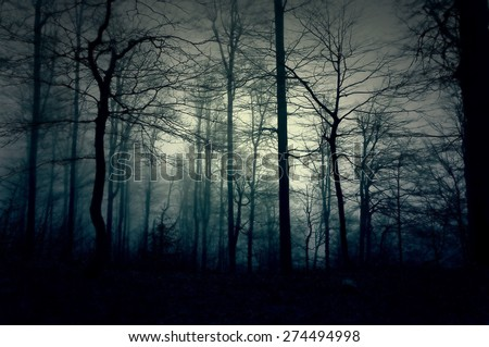 Dark blue forest with a magical mist - stock photo