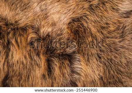 Dark Brown Fur Natural, Wolf Fox, Animal Wildlife Hair Fur / Concept and Idea Style for Background, textures and wallpaper. Close up Full Frame. - stock photo