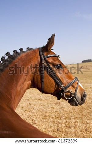 Dark brown horse standing while looking back - stock photo