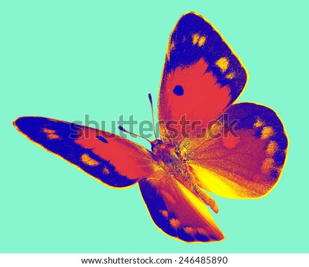 Dark Clouded Yellow (Colias croceus) in flight isolated on a white background - stock photo