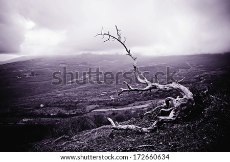 Dark cloudy sky and old tree, despair concept - stock photo