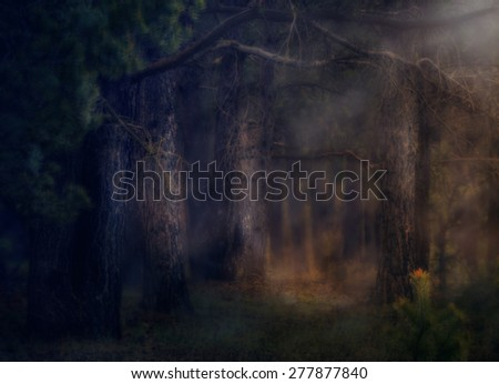 dark deep magical forest with fog halloween background