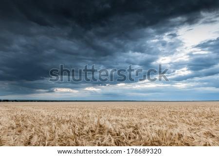 dark dramatic field and sky landscape - stock photo