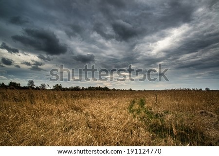 Dark dramatic landscape stormy sky over wetlands - stock photo