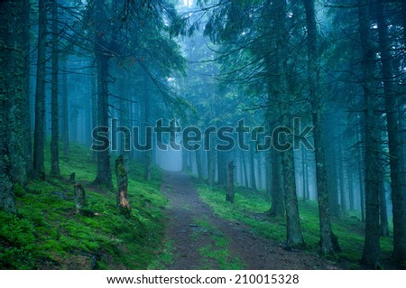 dark dreamy forest road with fog - stock photo