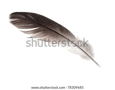dark feather isolated on white background
