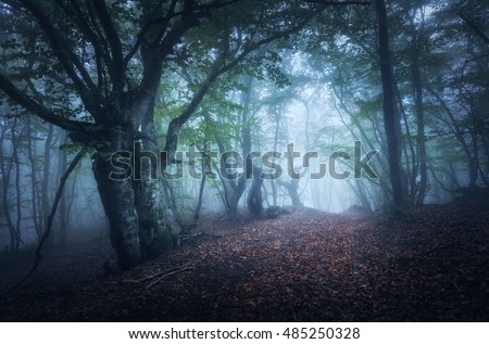 Dark fog forest. Mystical autumn forest with trail in blue fog. Old Tree. Beautiful landscape with trees, path, colorful leaves and fog. Nature background. Foggy forest with magic atmosphere. Trees
