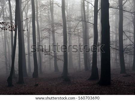Dark foggy forest - stock photo