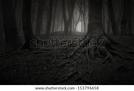 dark forest at night sepia with tree roots - stock photo