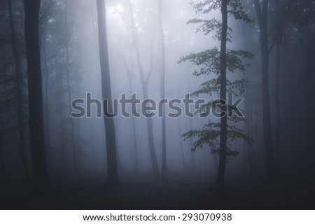 dark forest background - stock photo