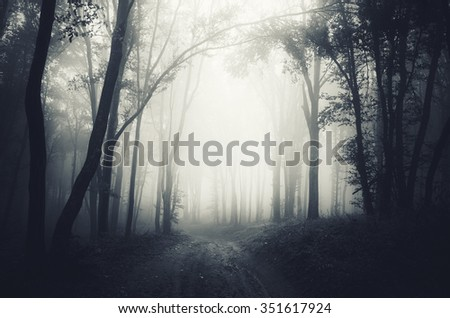 dark forest fog - stock photo