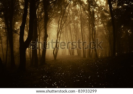 dark forest in autumn