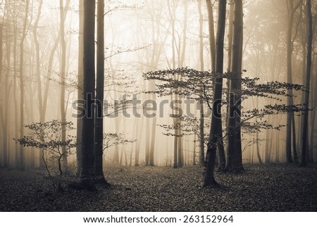 Dark forest in the fog - stock photo