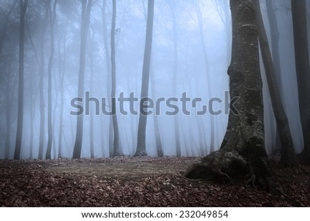 Dark forest in the night with mist - stock photo