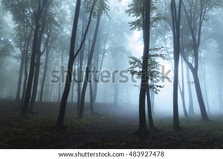 Dark forest into the morning fog
