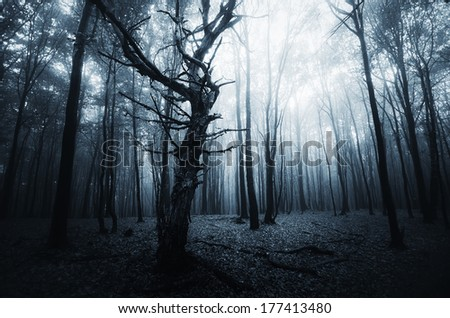 dark forest landscape with old tree - stock photo