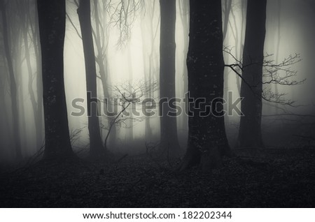 dark forest with black trees - stock photo