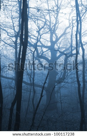 dark forest with fog and cold light - stock photo