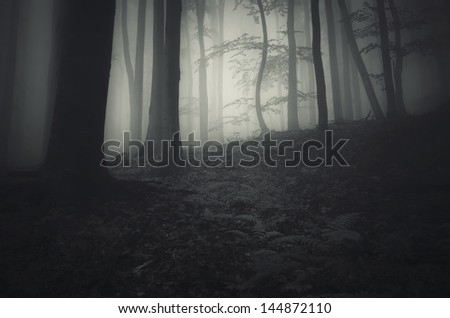 dark forest with fog and twisted tree - stock photo
